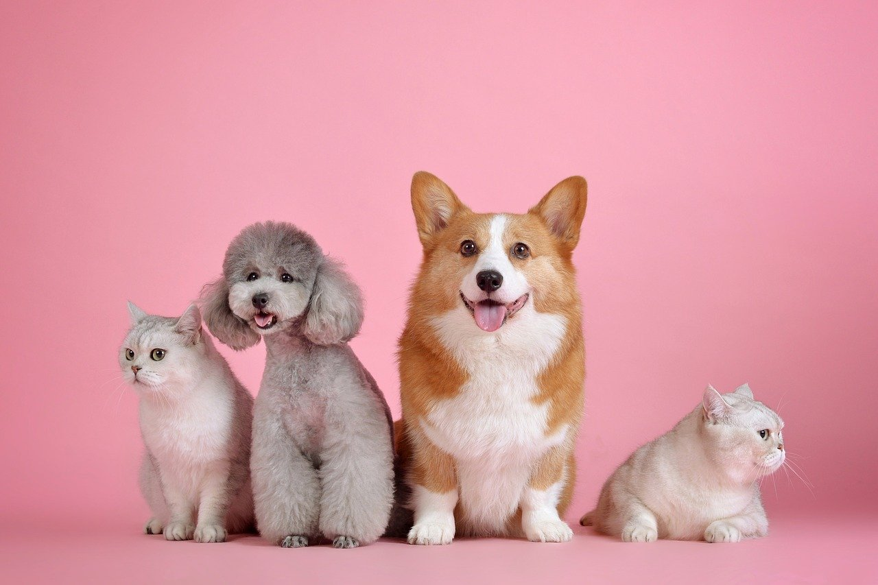 5 Places where you can buy a pet in Lagos